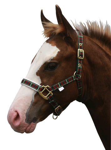 Tartan and Padded Foal Headstall