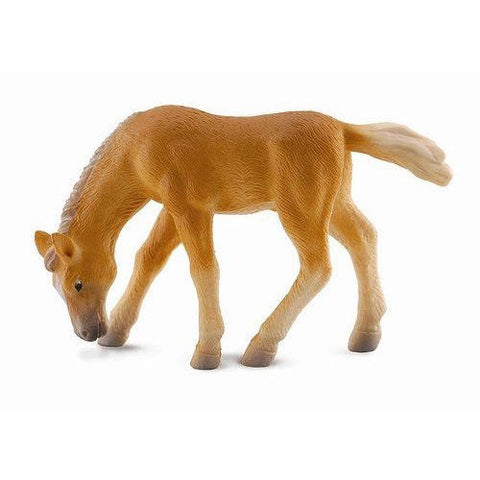 toy haflinger brown foal grazing