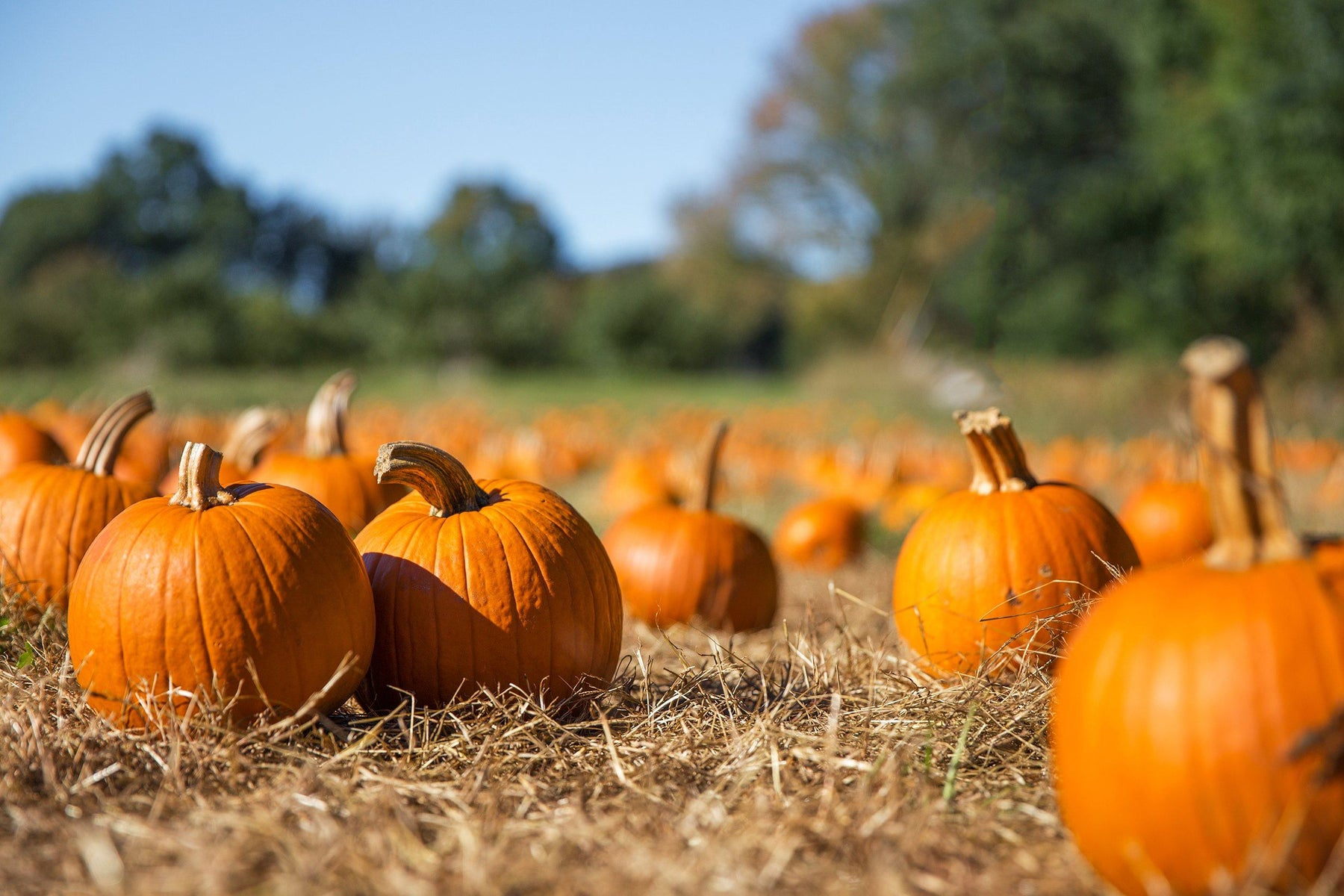 Not just for carving – how to enjoy pumpkins this Halloween