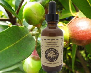 Andiroba Oil Wild Harvested - Heavenly Skin HQ