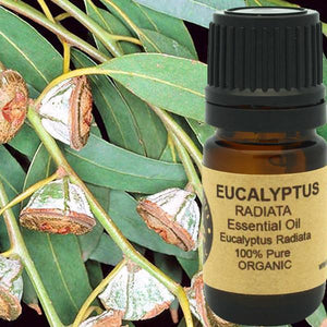 Eucalyptus Essential Oil Organic (Radiata) - Heavenly Skin HQ