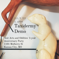 Taxidermy Demo