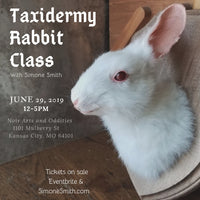 Taxidermy Rabbit Class