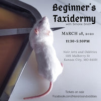 Beginner's Taxidermy Class