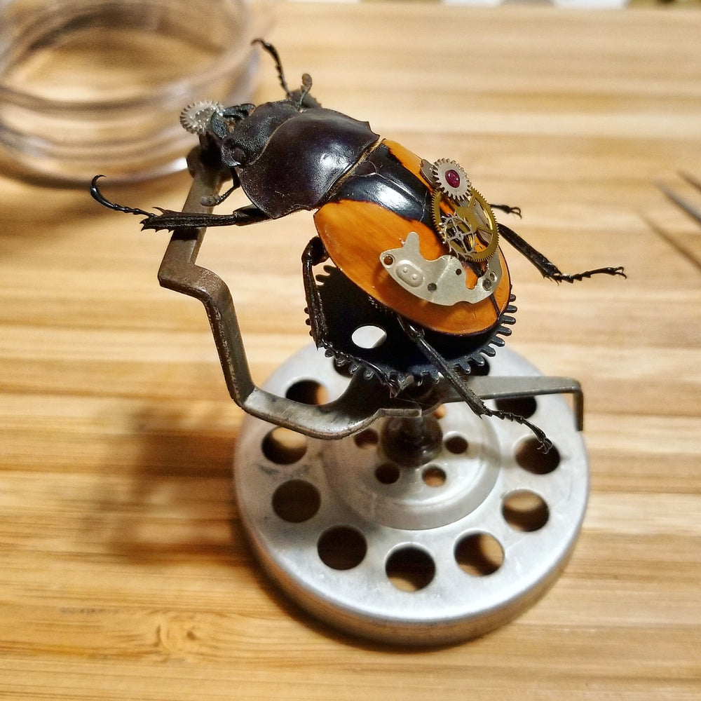 preserved beetle with clock parts
