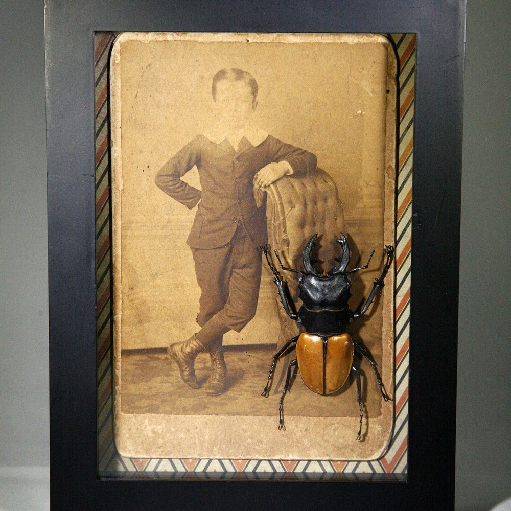 Preserved beetle with antique Victorian cabinet card photo of child in black shadowbox frame