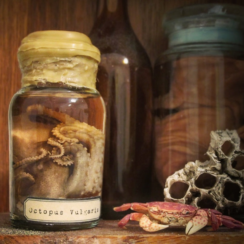 Real fluid preserved wet specimen octopus in wax covered jar with specimen label next to a dried preserved crab and barnacles.