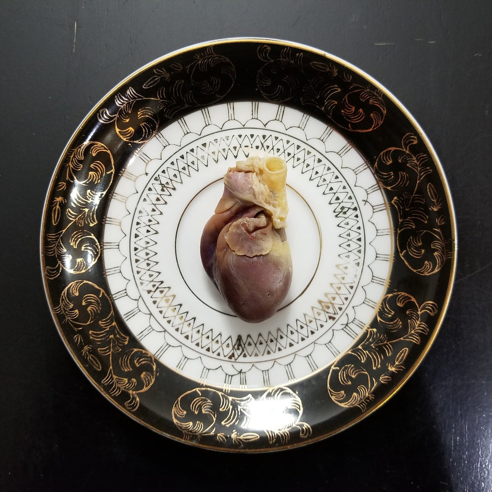 Fluid preserved wet specimen cat heart from pet preservation memorialization