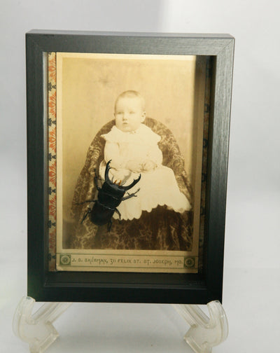 Victorian Portrait of Child with Real Preserved Beetle in Shadowbox
