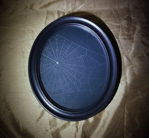 Genuine Preserved Spider Web in Oval Frame
