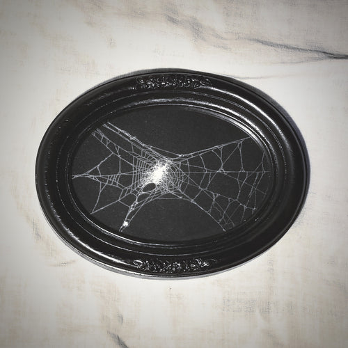 Genuine Preserved Spider Web