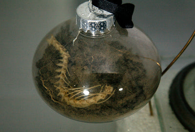 Real Cemetery Dirt and Bone Terrarium Ornament From Historic Missouri