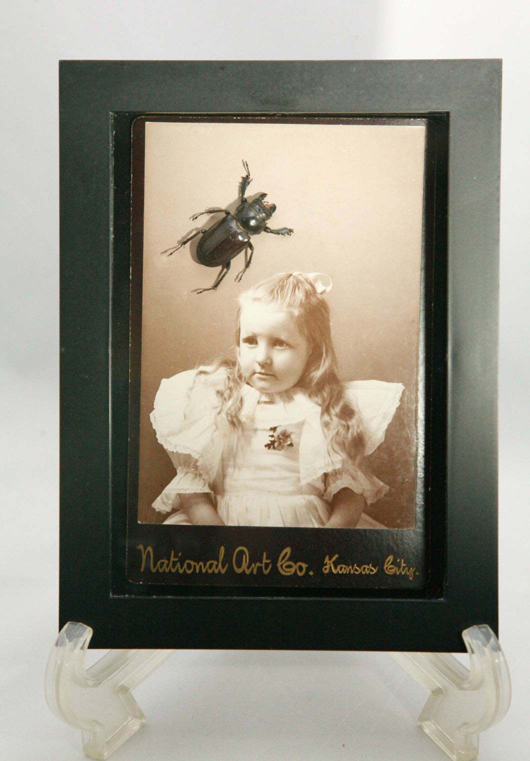 Child and Beetle Framed Entemology Display with Antique Cabinet Card and Real Preserved Insect