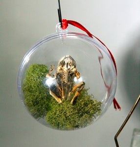 Flattened Frog ~ Cabinet of Curiosities Christmas Tree Ornament