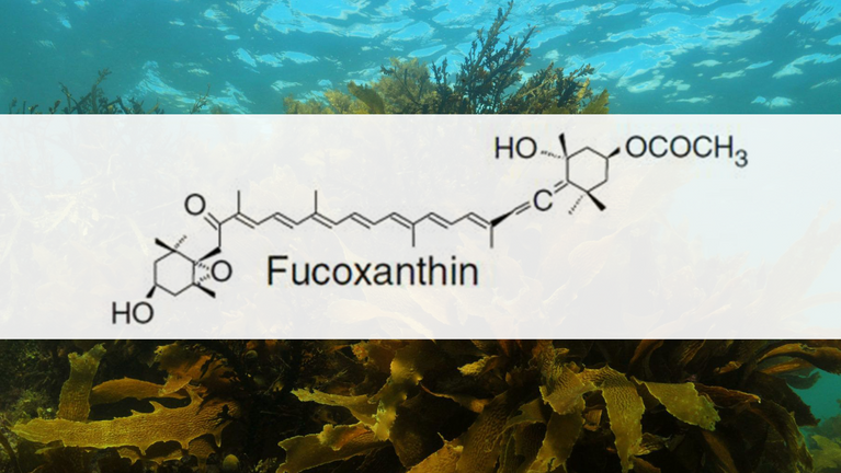 Top Ingredients to Burn Fat: Fucoxanthin