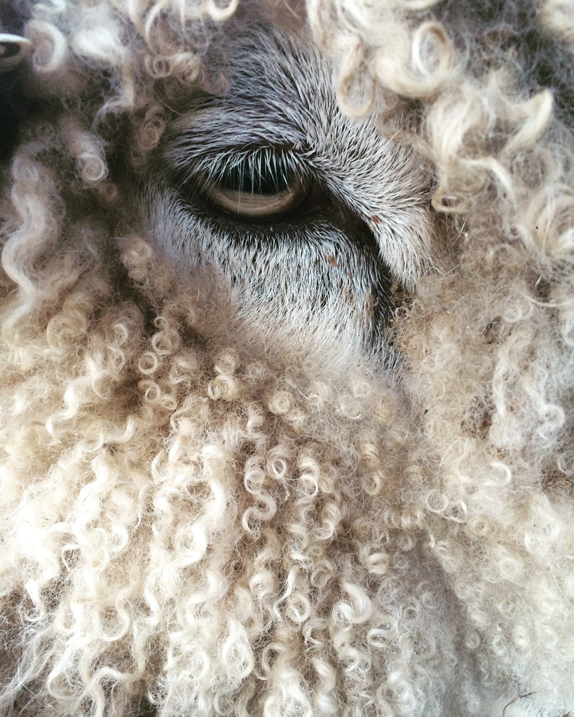 LEICESTER LONGWOOL ROVING
