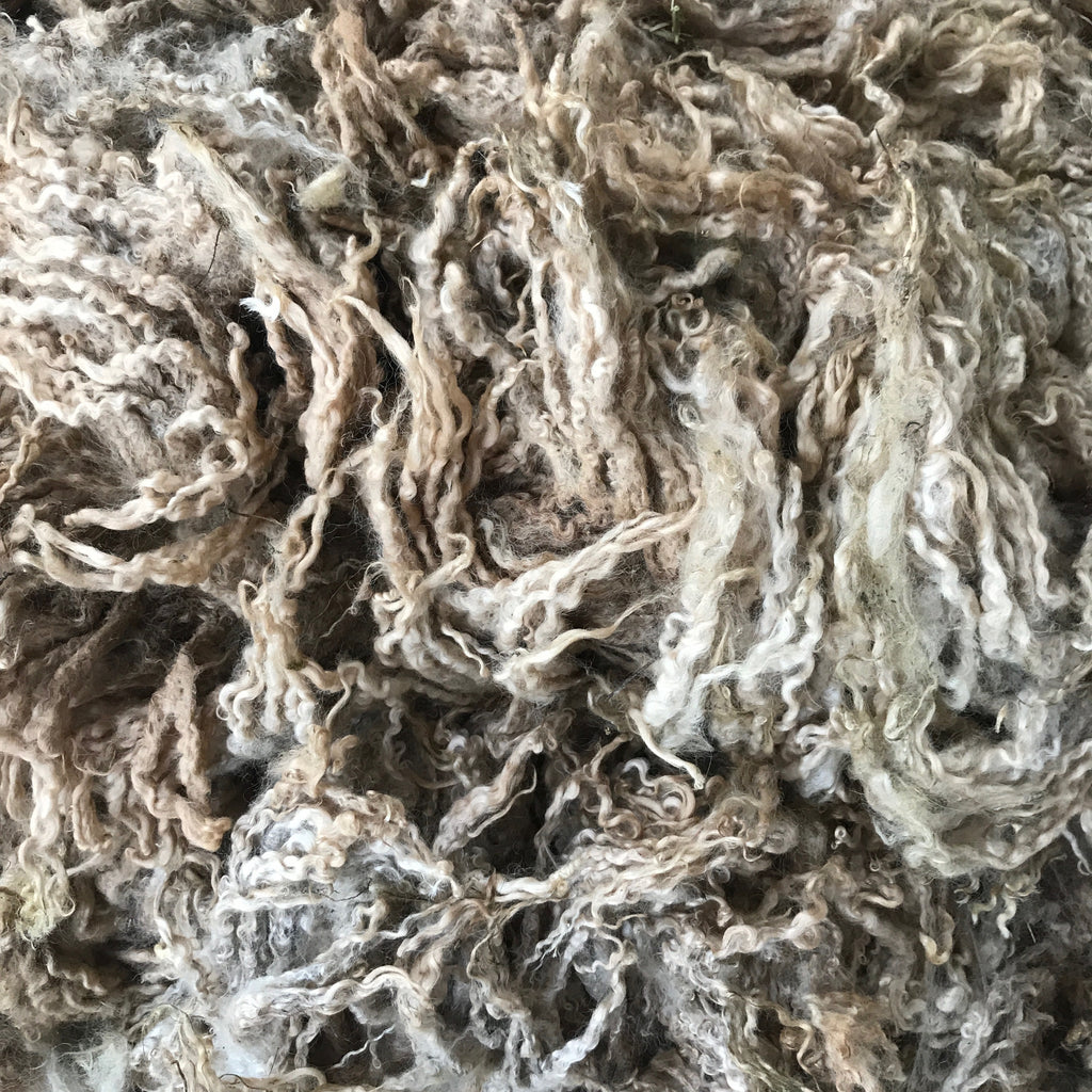 "TEESWATER LAMB RAW FLEECE | ""LOUIS"""
