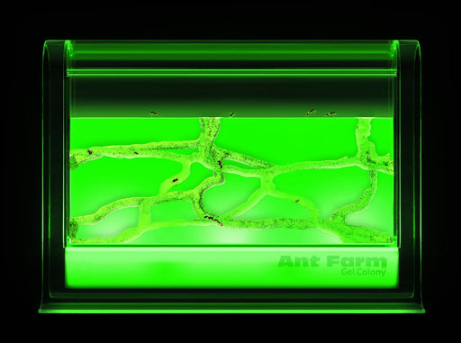 Gel Ant Farm LED