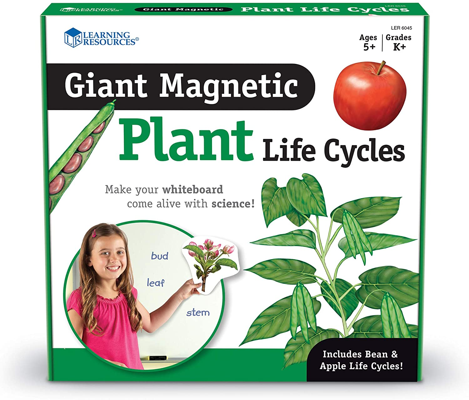 Plant Life Cycle-Magnetic