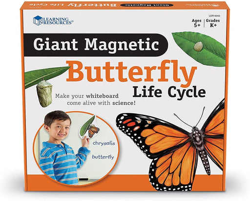 Butterfly Life Cycle-Magnetic