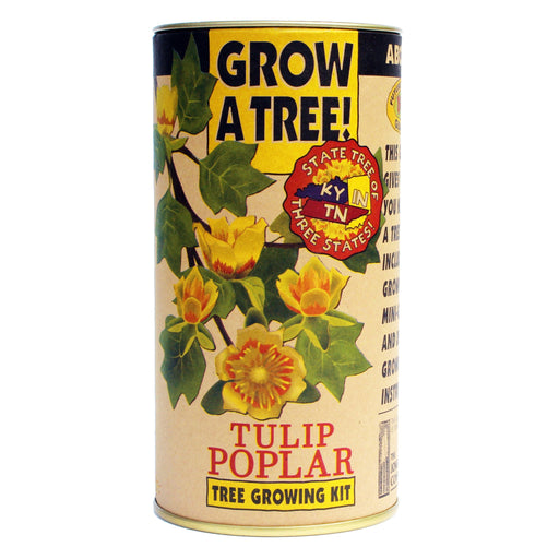 Tulip Poplar Tree Growing Kit