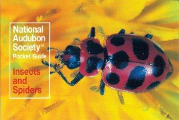Audubon Insects Pocket Guide