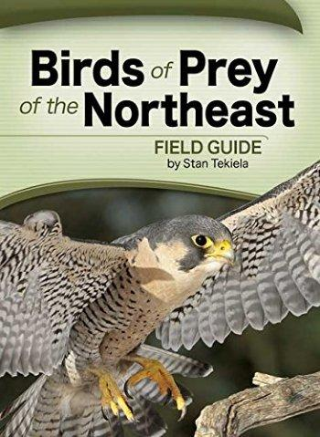 Birds of Prey of the Northeast