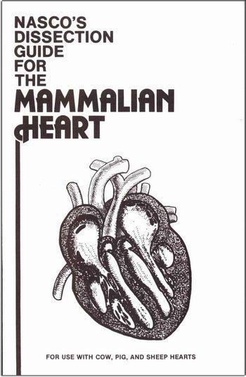 Mammalian Heart Dissect Guide