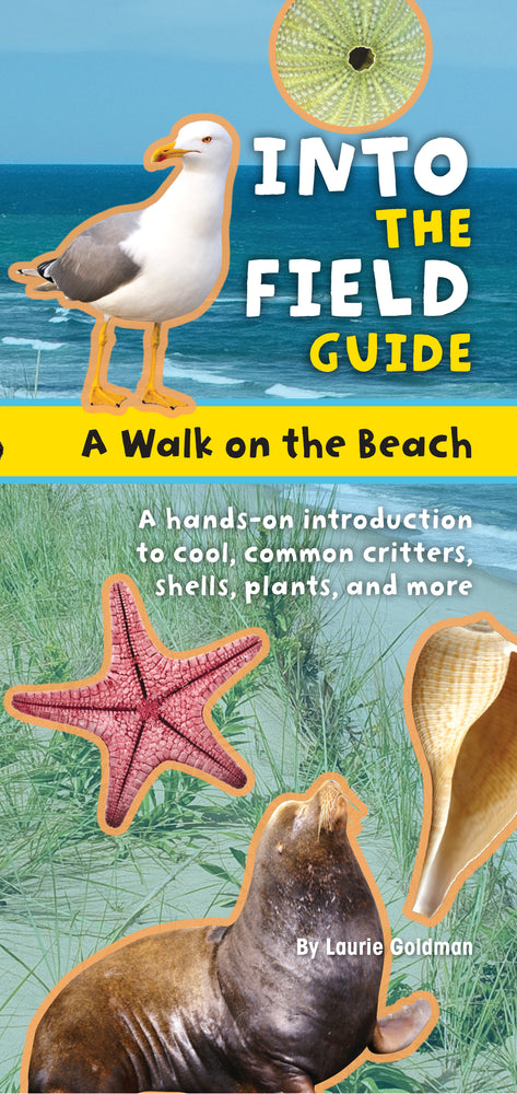 Into The Field Guide Beach Walk