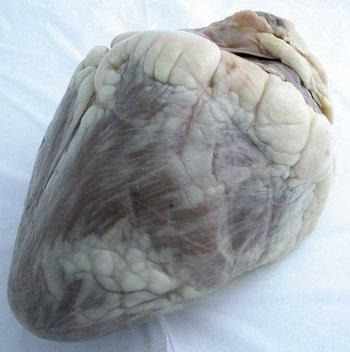 Cow Heart 1lb 8 oz