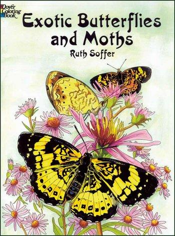Exotic Butterflies & Moths C.B