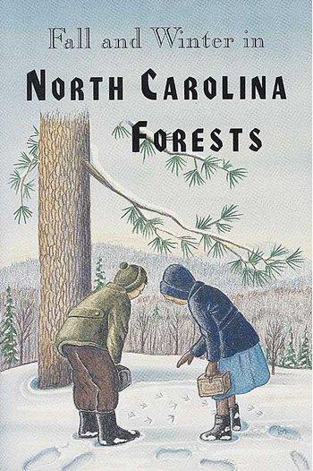Fall & Winter in NC Forests