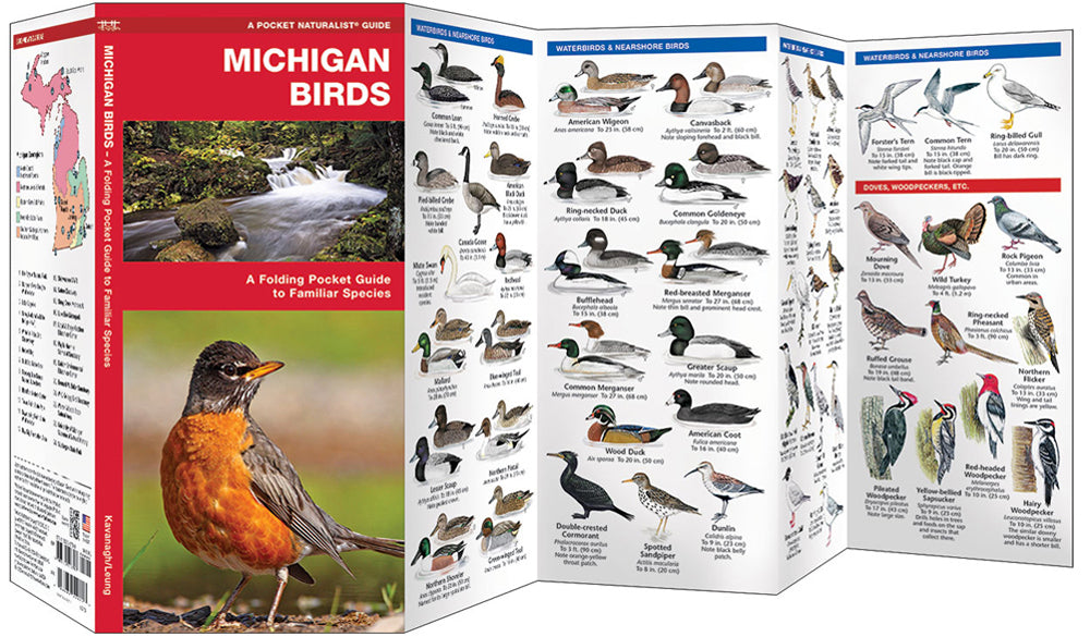 Michigan Birds - PN
