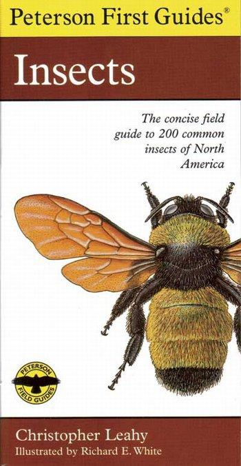 Insects - Peterson 1st Guide