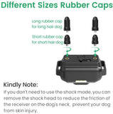 dog training collar safe