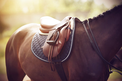 Foothills Farm has most of the equipment you need to start riding lessons.
