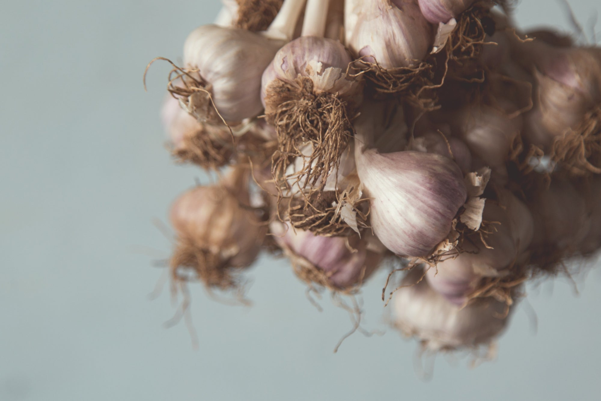 History of Garlic