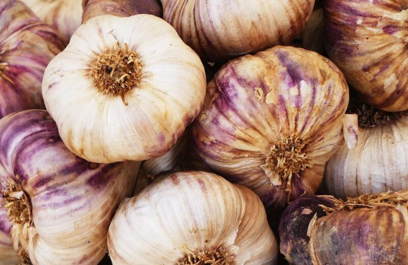 A bunch of organic garlic white and purple.