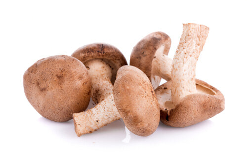 Shiitake mushrooms with white background.