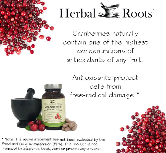 Cranberries, mortar and pestle, cranberry with nettle bottle and white background. Cranberries features.