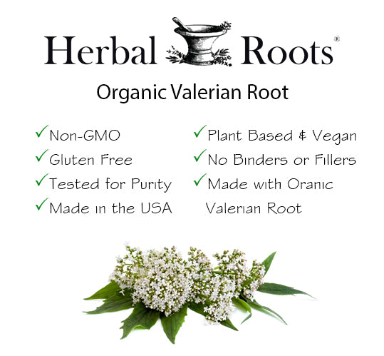 Organic valerian root infographic with its features.