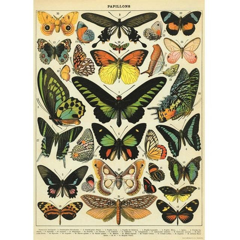 Vintage Butterfly Poster / Gift Wrap