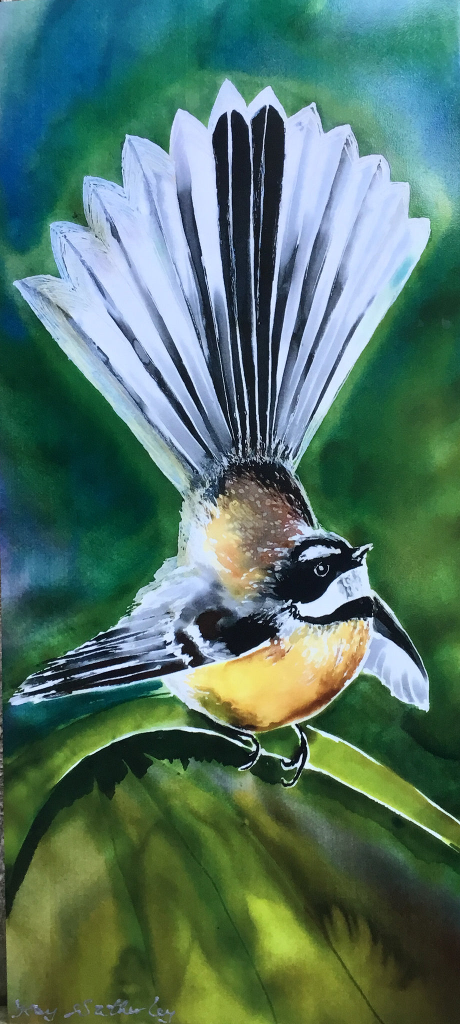 A Video of NZ Birds Outdoor and Indoor Art.