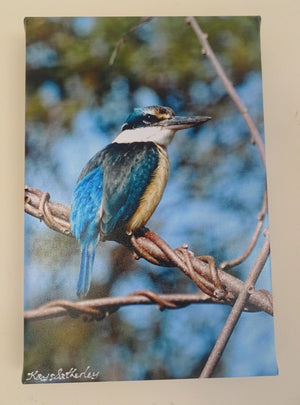 Photo on Canvas - Kingfisher, Kotare
