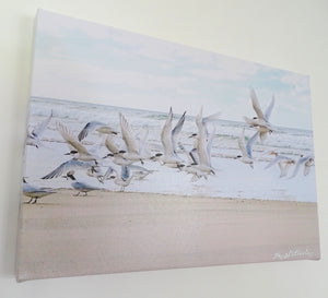 Original Photo on Canvas - Terns at Pakiri