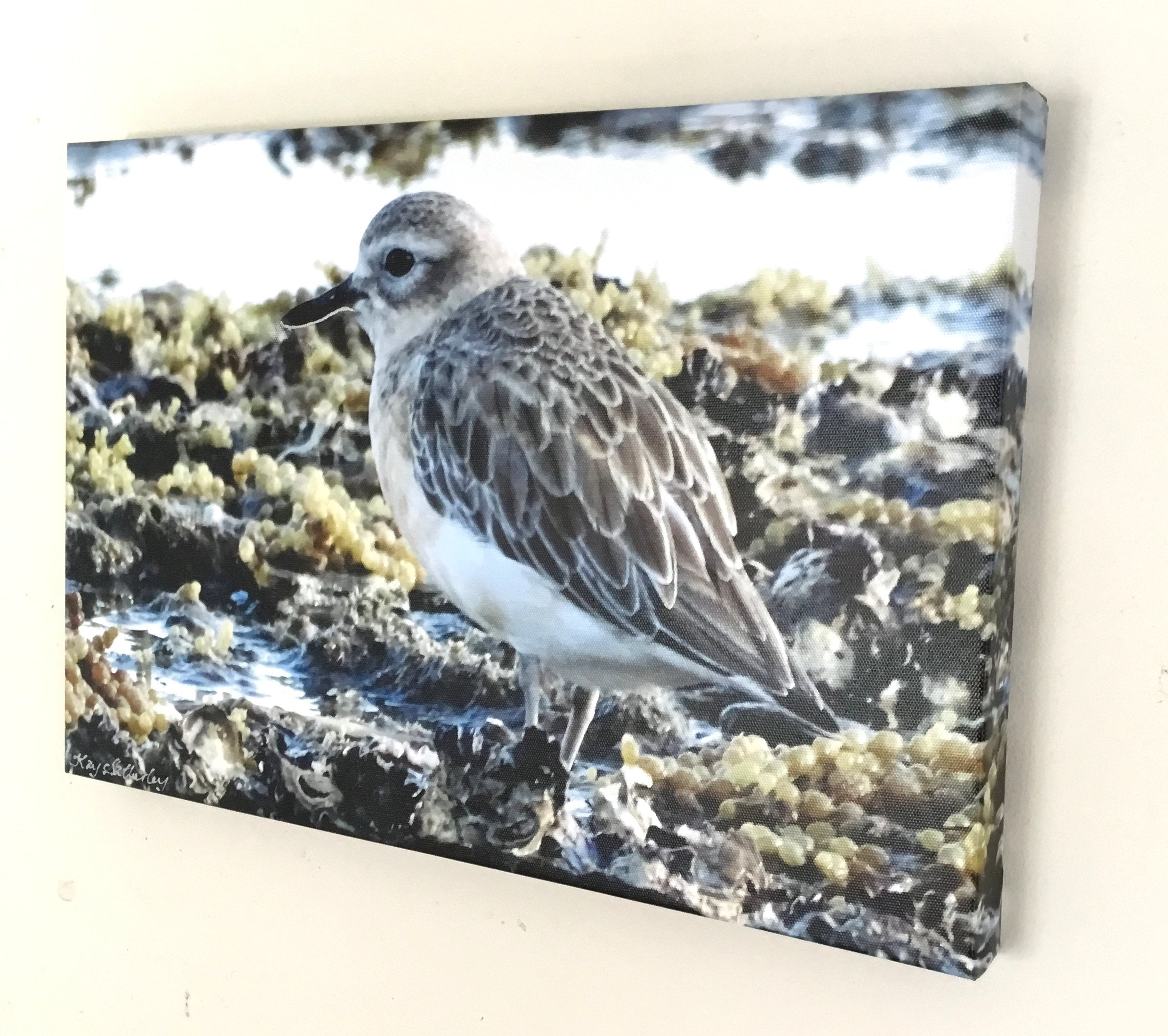 Original Photo on Canvas - Dotterel, Tuturiwhatu