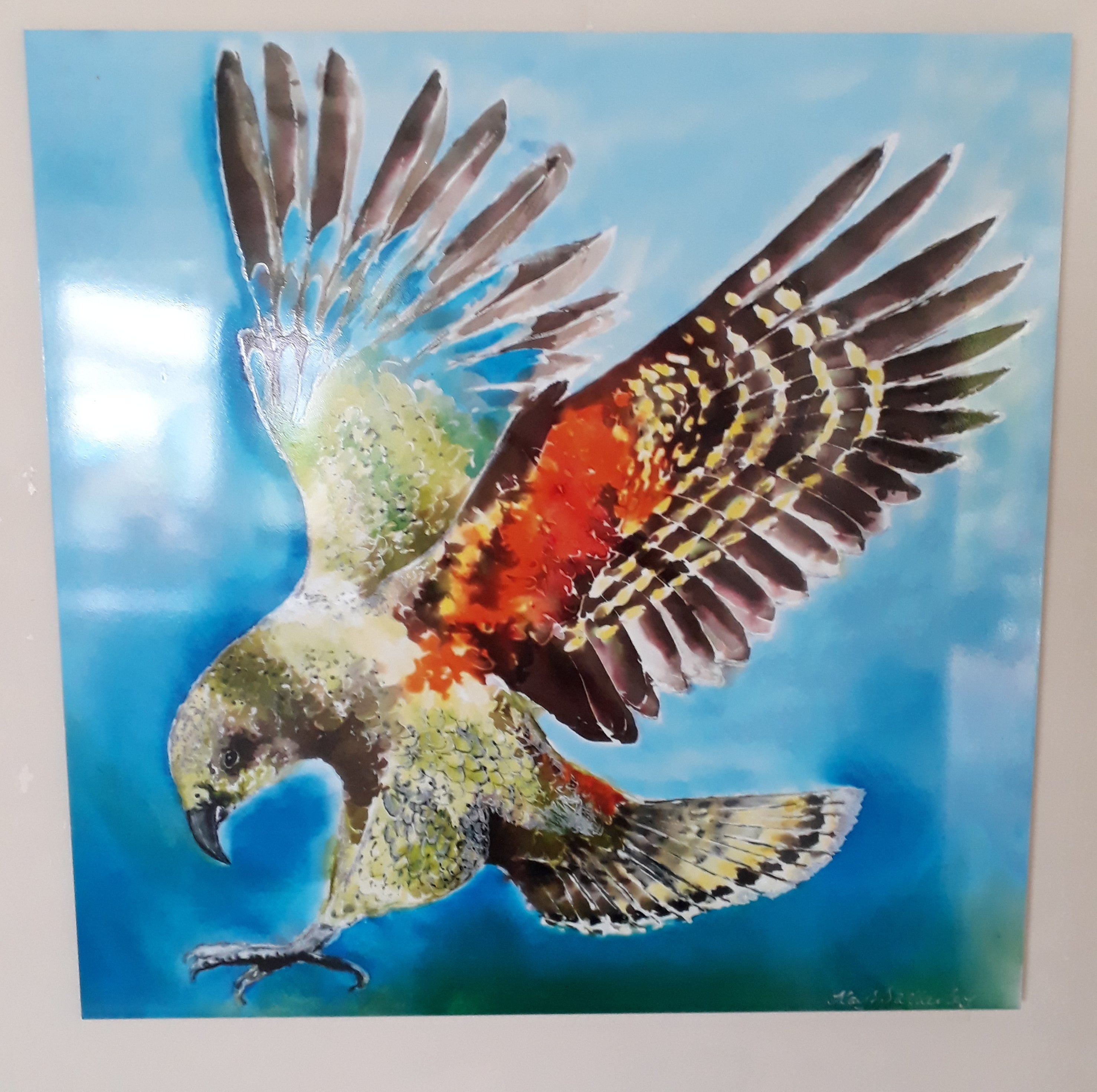 Kea Bird, NZ Alpine Parrot - Square Art Panel