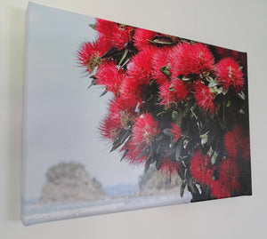 Original Photo on Canvas - Pohutukawa at the Beach