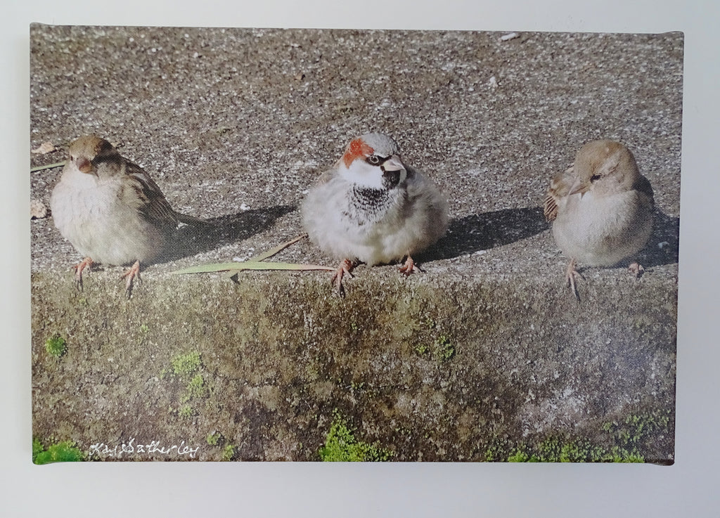 Original Photo on Canvas - Sparrows in a Row