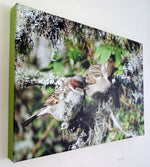 Photo on Canvas - Sparrows on Lichen Tree
